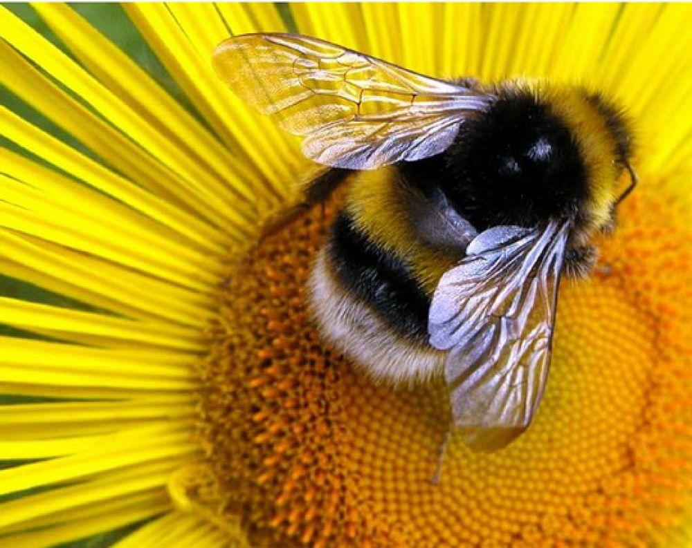 Феодосийские пчелы заносят мед!