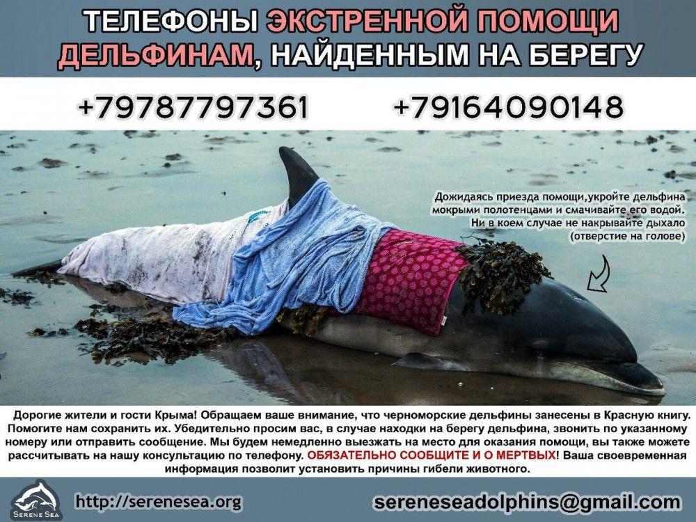 Феодосийцы и гости города, нашли дельфина, срочно звоните!