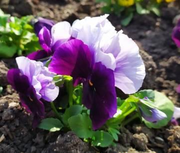 Продолжаем радоваться ярким фото весны!