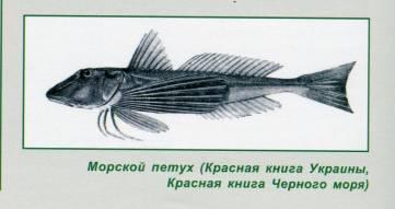 Феодосийские рыбаки рыбсовхоза «Волна революции»