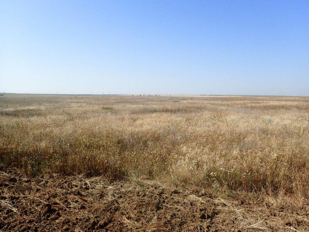 В Феодосии начали проверять, как на самом деле используются земли сельхозназначения