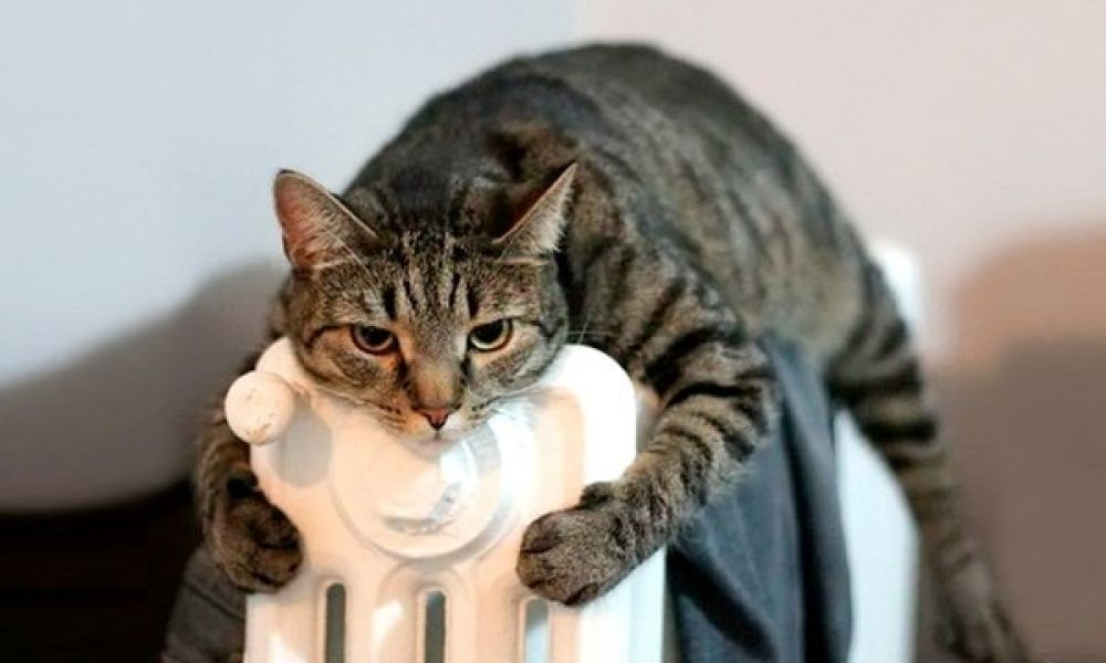 В Феодосии холодает...