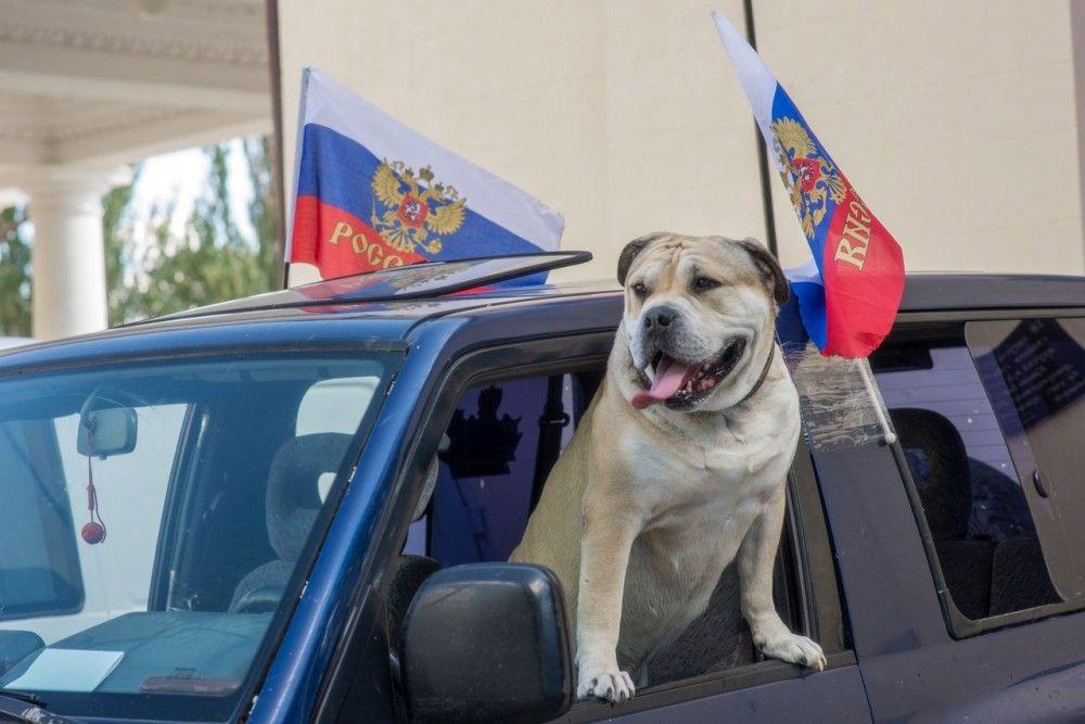Патриотический автопробег пройдет в Феодосии по случаю Дня города
