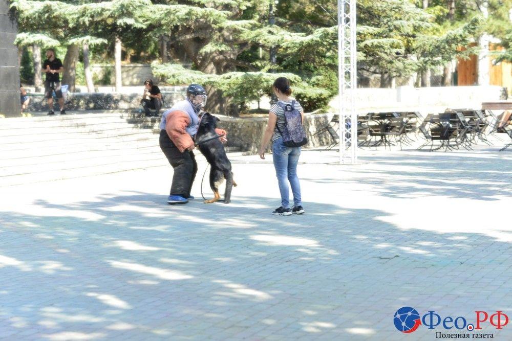 Показательные выступления служебных собак в День города Феодосии