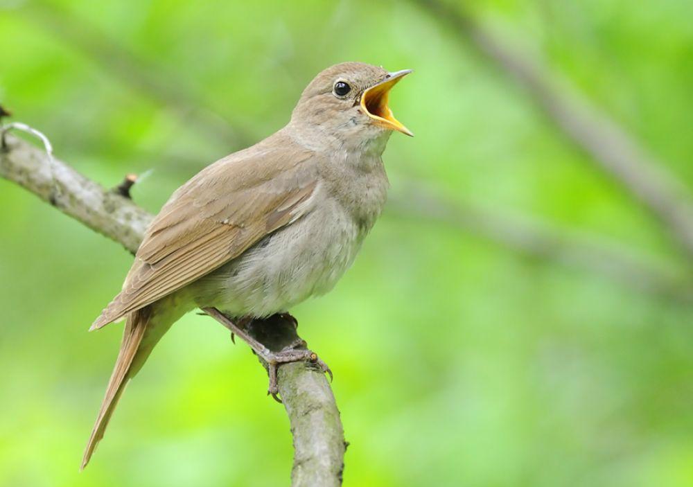 Птички больше петь не будут?