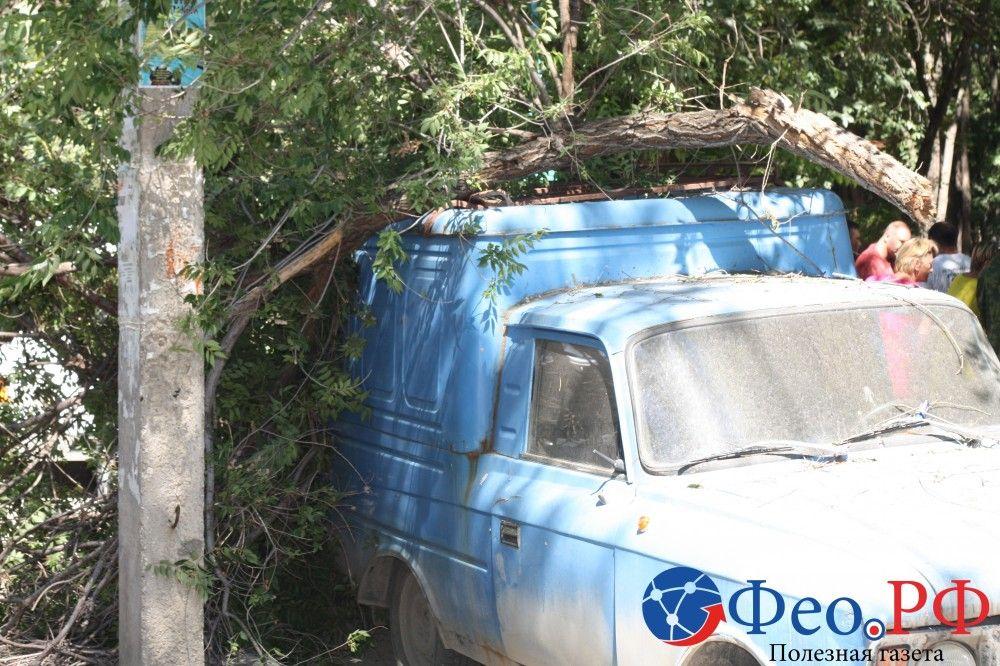 В Феодосии часть дерева рухнула на автомобиль