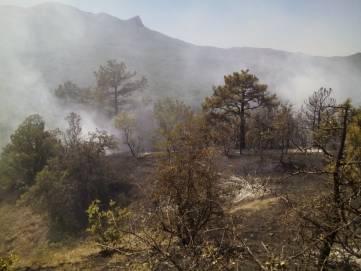 Под Феодосией сильно горел лес (ФОТО)
