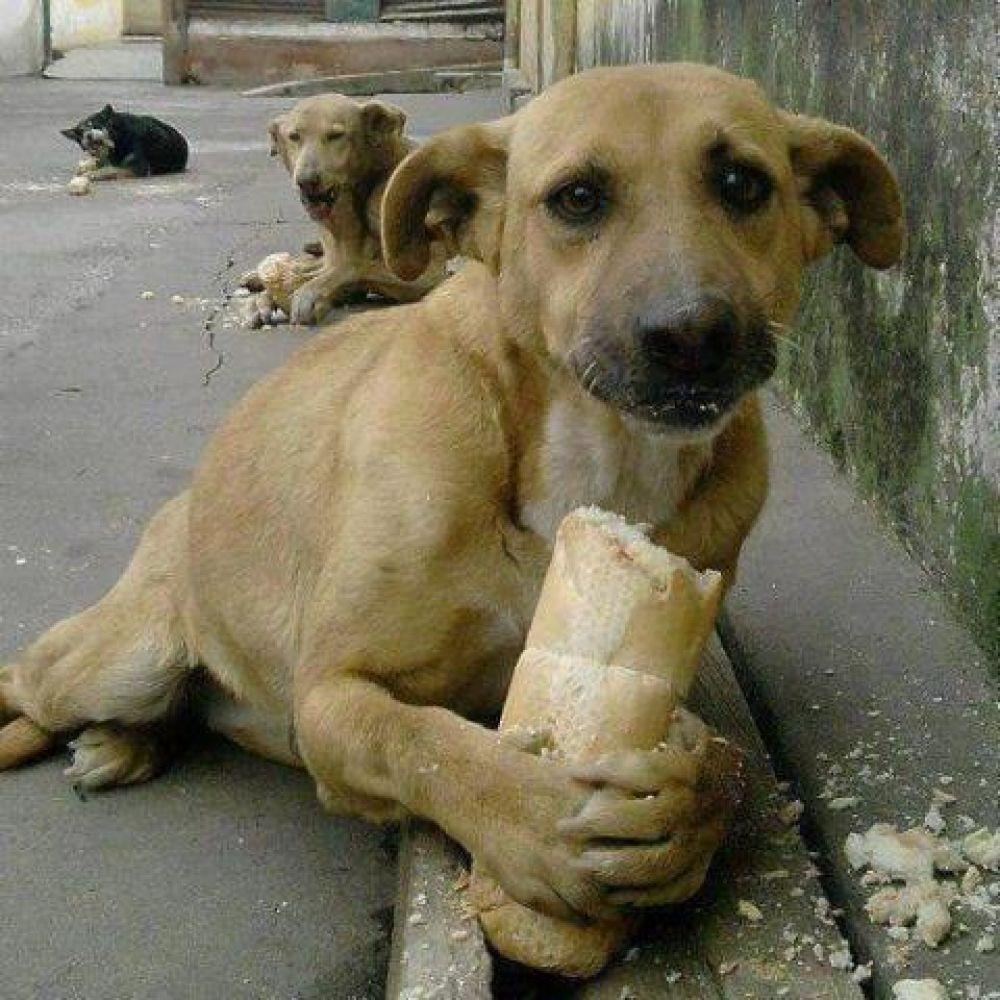 В Феодосии проведут тендер на отлов собак