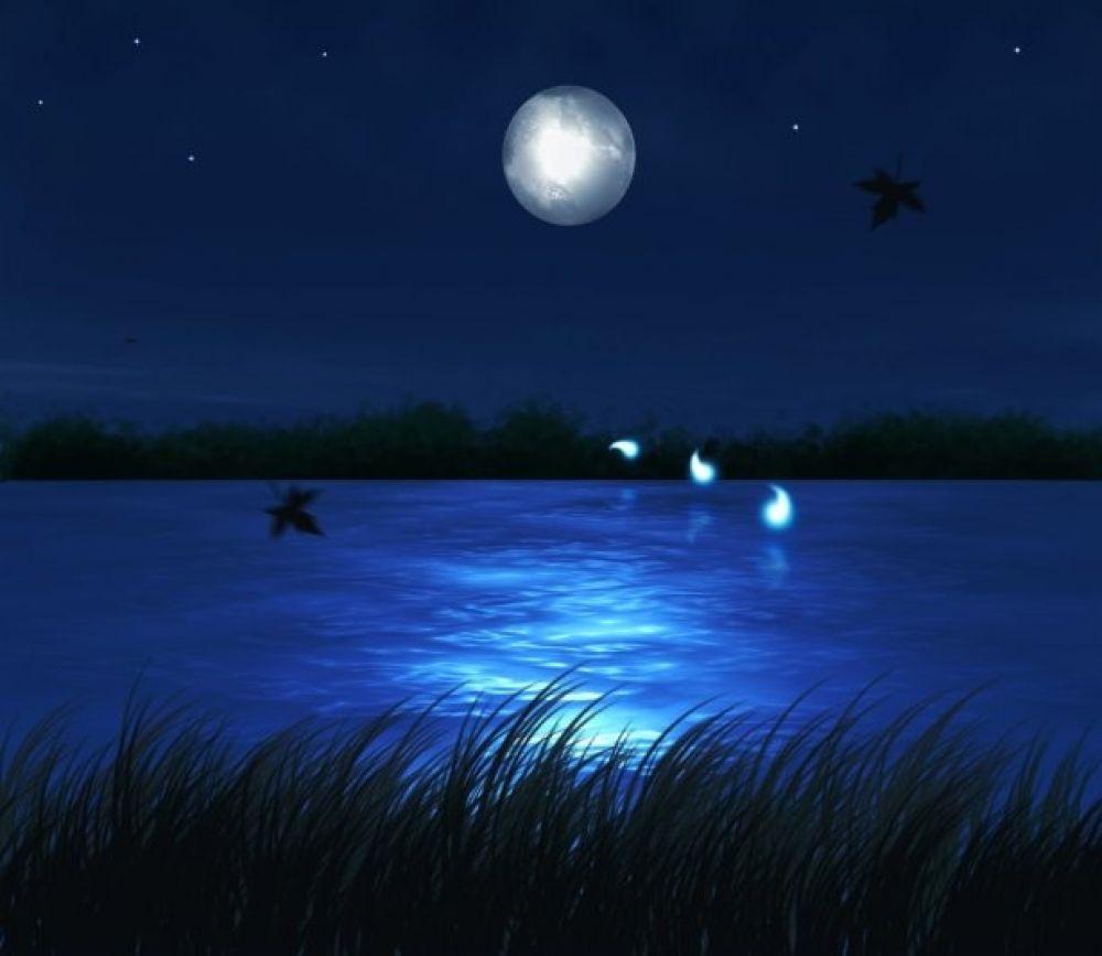 Сегодня День чудес на болоте