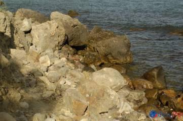 Лисья бухта как морская лисица