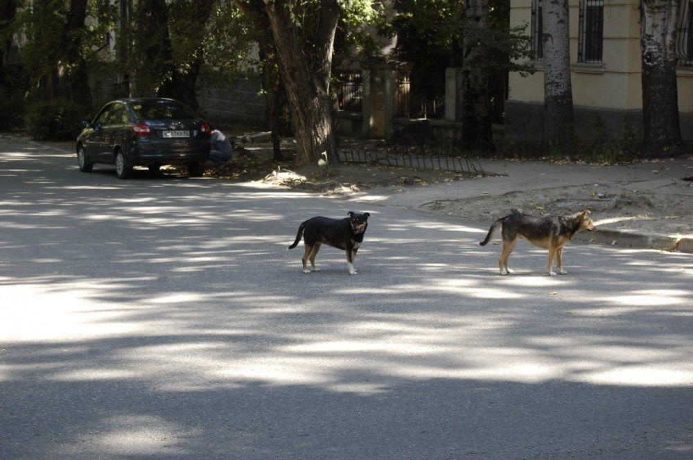 В Феодосии нашли еще два трупа собак в районе Полевой