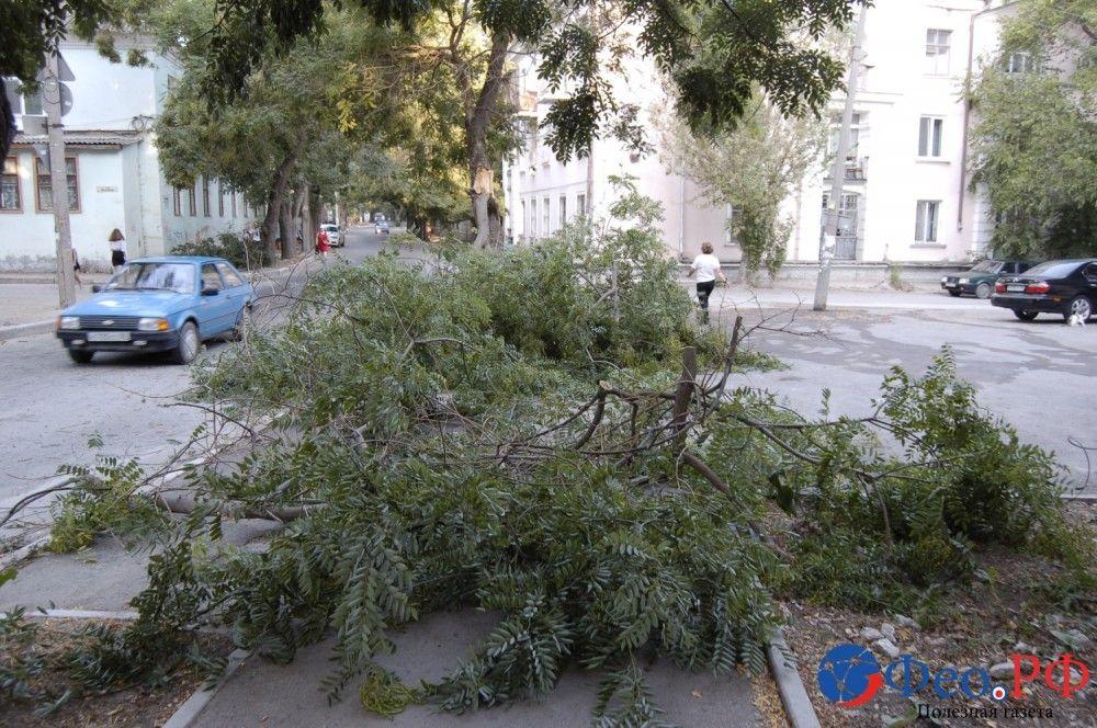 В Феодосии ночные порывы ветра ломали большие ветки деревьев