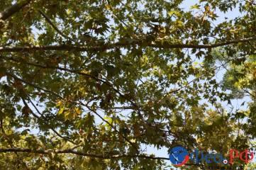 Прогуляемся по осенней Феодосии