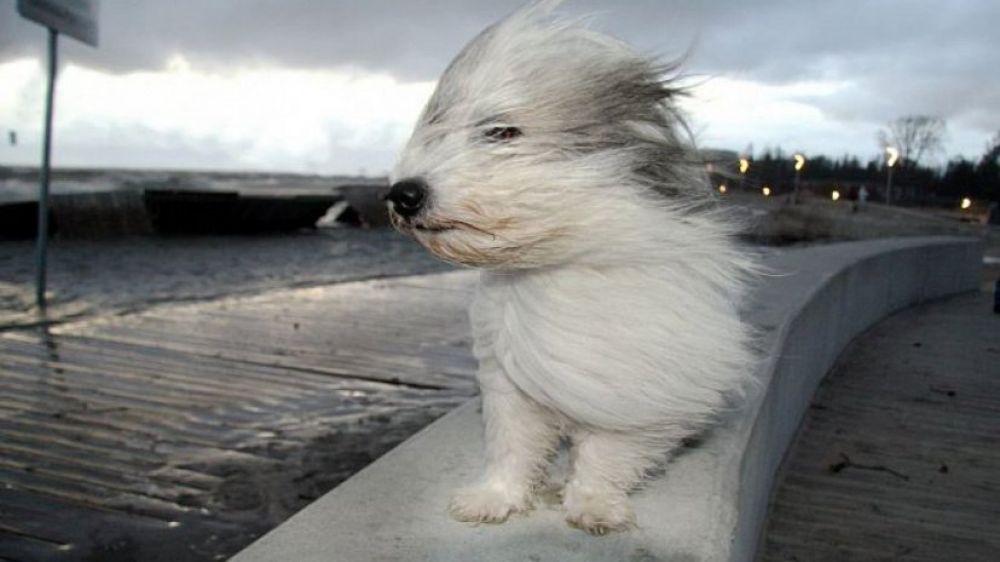 Осторожно, может снести ветром