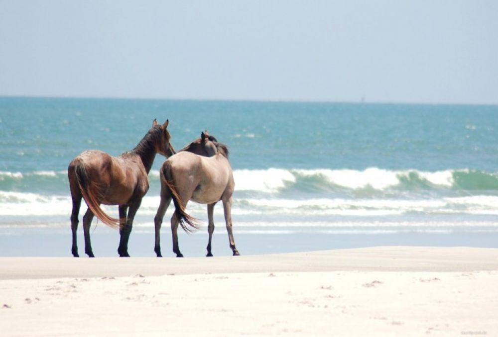 Под Феодосией лошади сбежали от хозяина на пляж