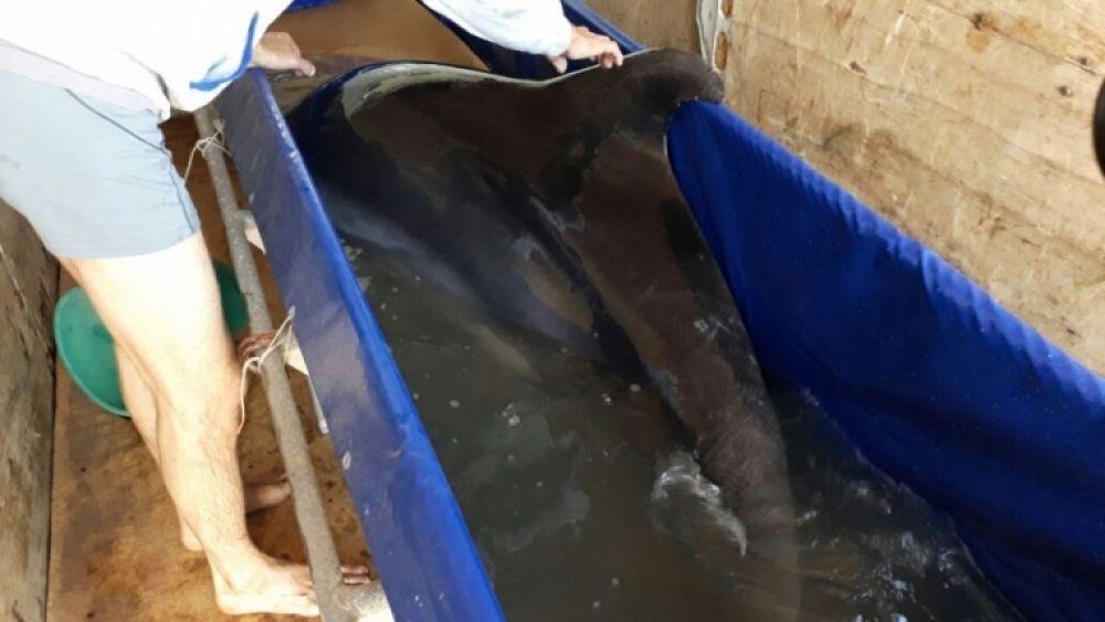 В порту Керчи задержали незаконного перевозчика дельфинов