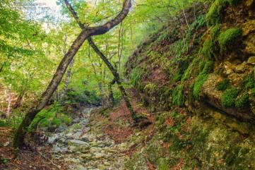 В осеннем лесу вместе с фотографом Вадимом Стрельцовым
