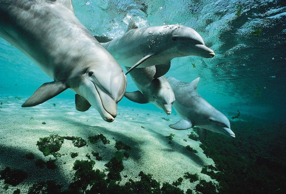 Ученые Карадага попытаются разобраться, почему дельфины выбрасываются на берег