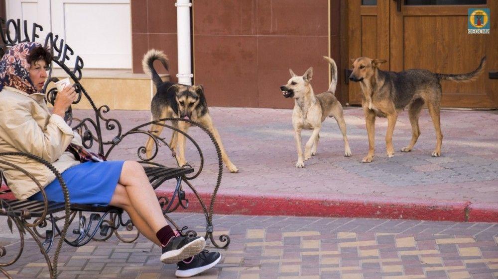 В феодосийском Орджоникидзе составят перечень мест скопления бродячих собак