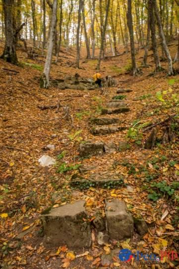 Старокрымские леса в буйстве желто-красных красок осени