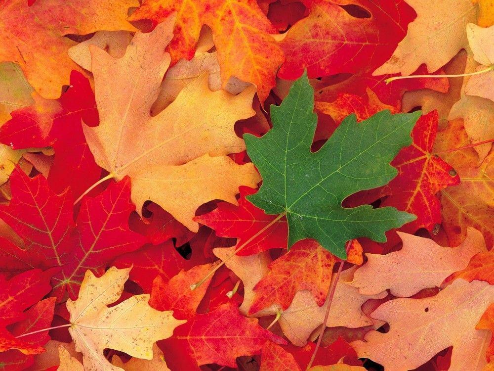 Осень, осень