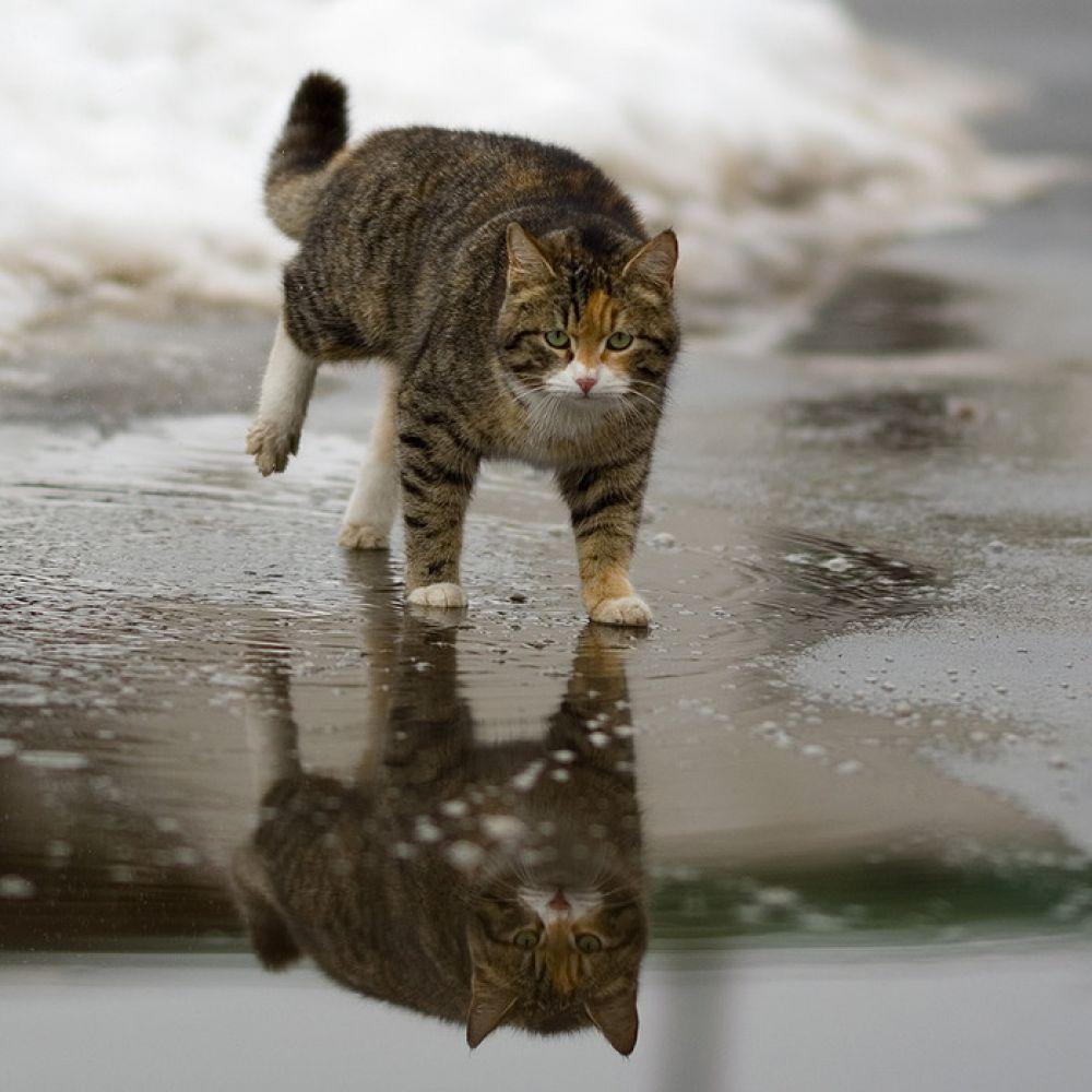 Дождливо в Феодосии