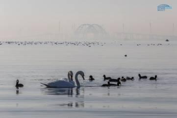 Ученые наблюдают за дельфинами в районе строительства Крымского моста (ФОТО)
