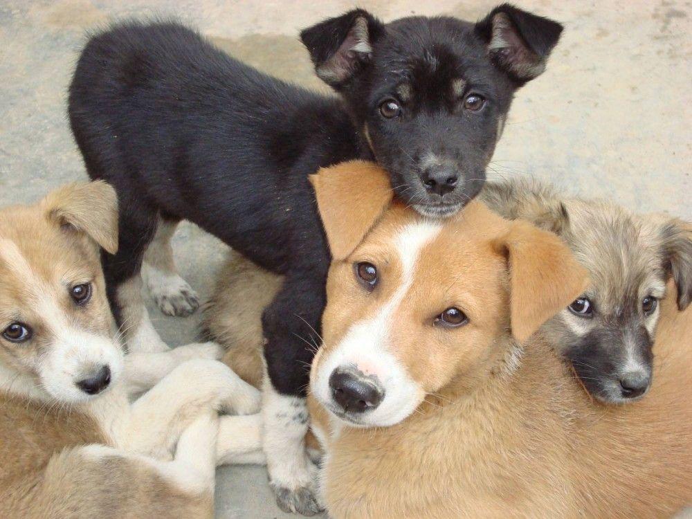 В Феодосии поймали отравителя собак?