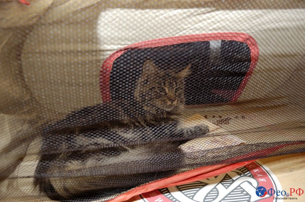 Феодосийцы показали своих кошек. Фоторепортажик