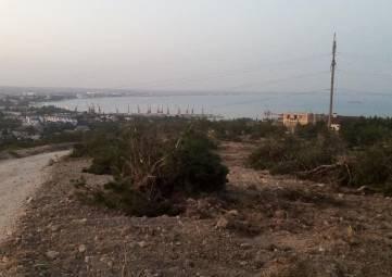 В Феодосии на Тепе-оба вырубают молодой лес! (дополнено) (видео)(фоторепортаж)