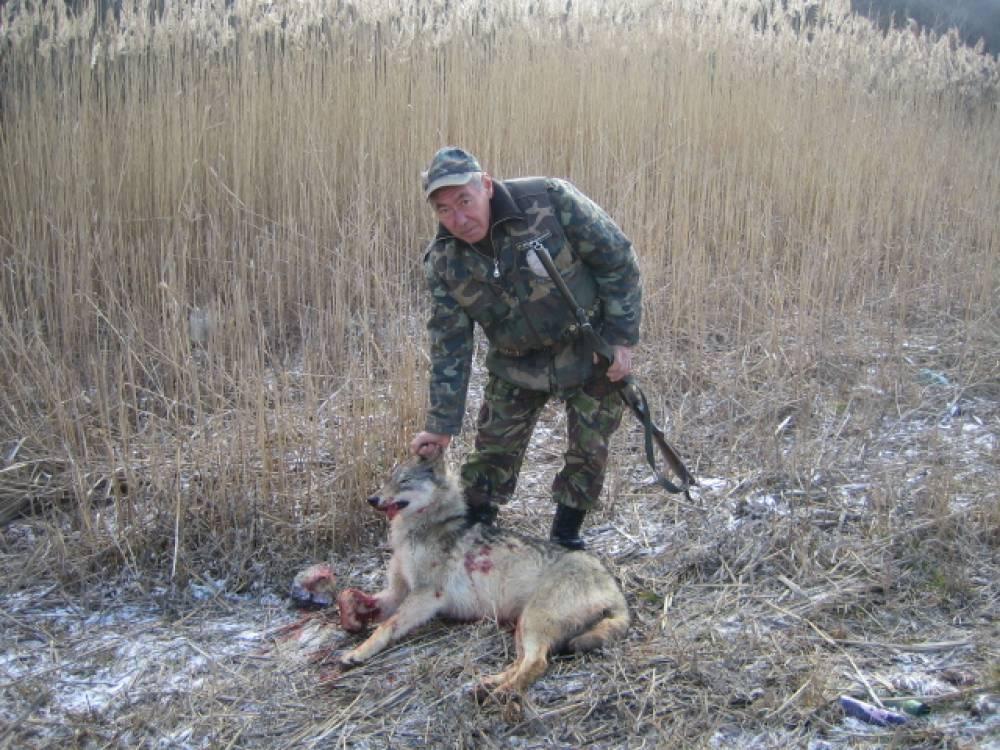 Отстрел волков в Крыму (фото)