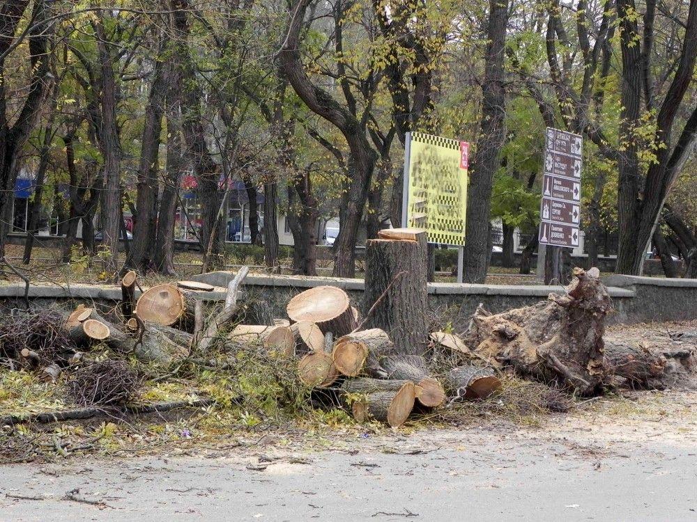 В этом году на озеленение Феодосии потрачено чуть более половины от запланированного