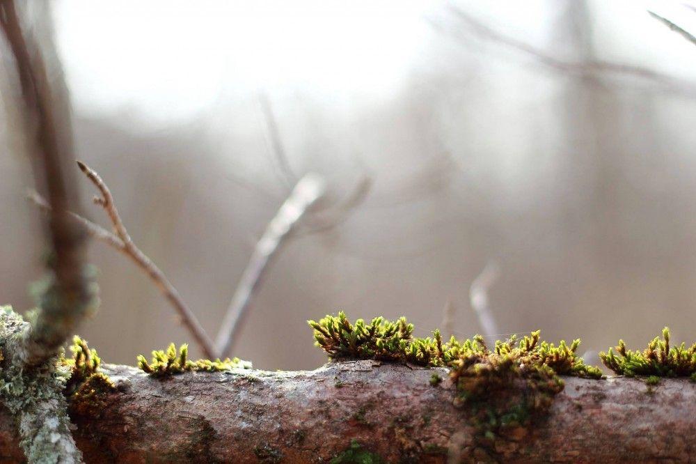 Лесной горизонт