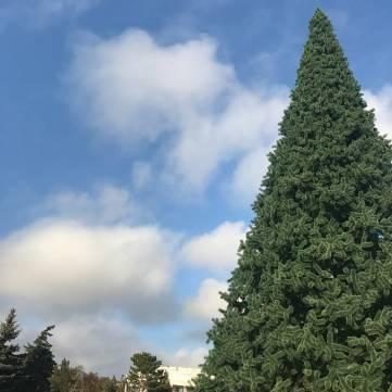Жители Керчи сами украсят одну из главных елок города