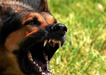 В феодосийском селе Береговое введён двухмесячный карантин из-за бешенства собаки