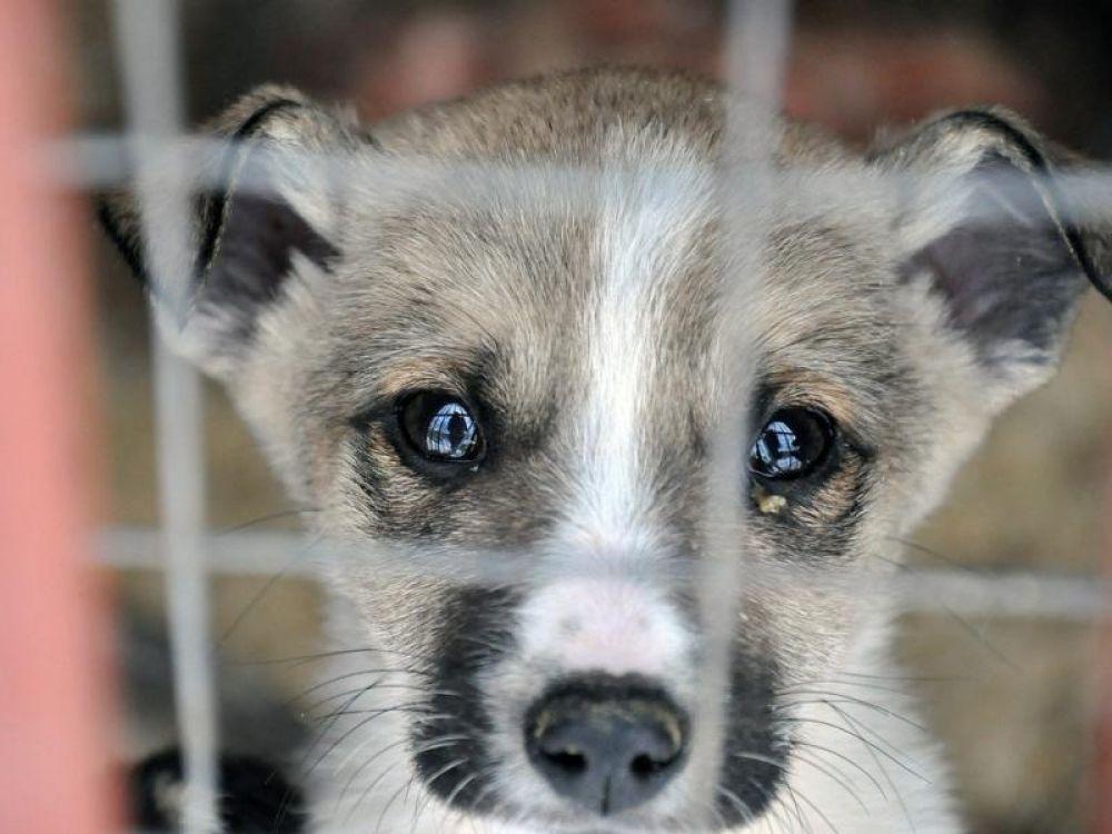 В Феодосии приюта для животных на полигоне не будет