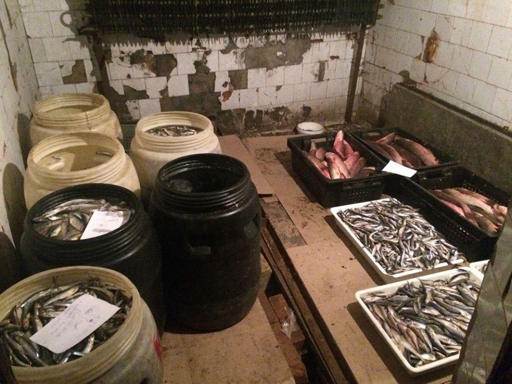 В Керчи сожгли почти полтонны снятой с реализации рыбы