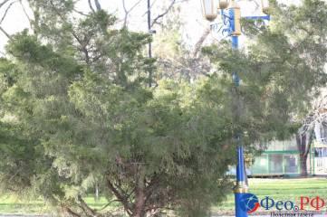 Зеленый декабрь в Феодосии