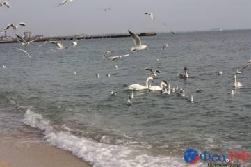 Море чаек в Феодосии
