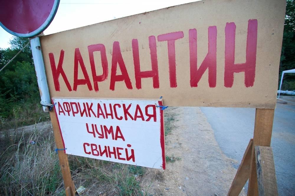 Африканская чума свиней вернулась в Восточный Крым