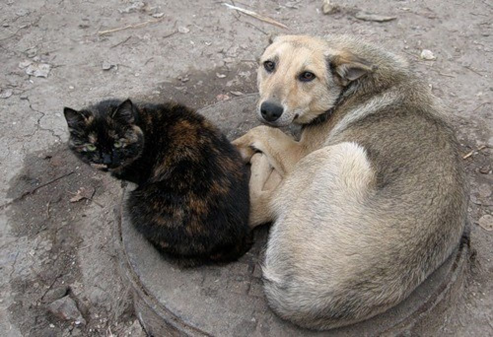 Помогите спасти животных