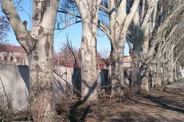 «Единая Россия» предлагает проект «Уютный уголок – к майским праздникам»