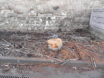 Феодосийцы бьют тревогу: зачем в городе массово пилят деревья? (+ фото)