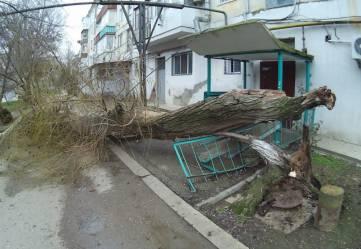 Феодосийцы сообщают о свалившихся от ветра деревьях