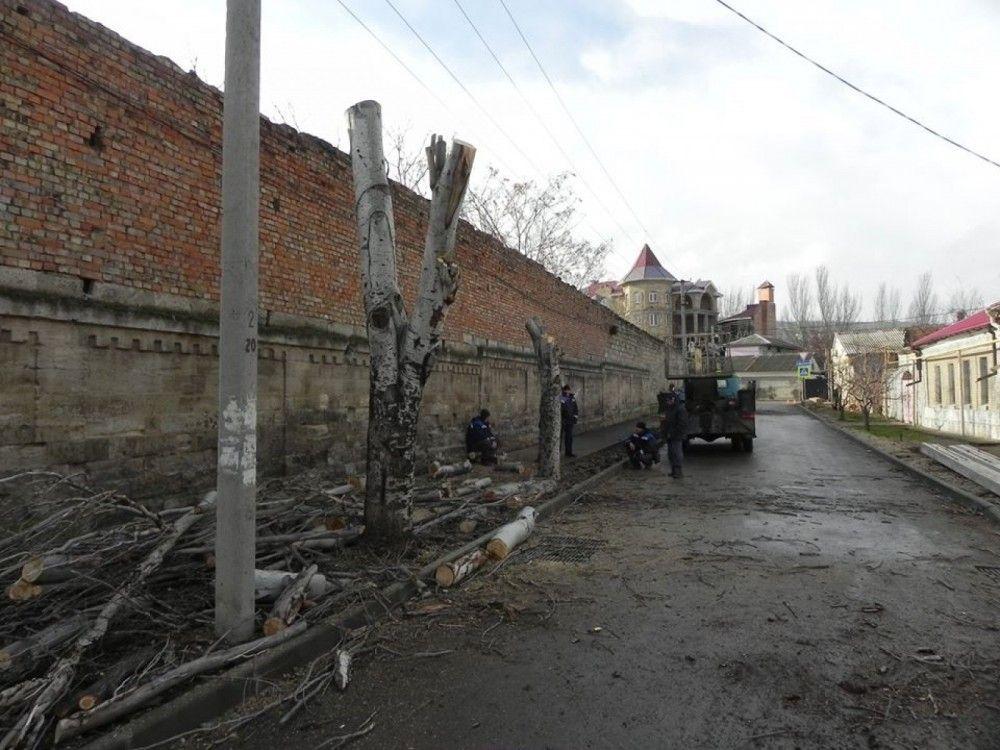 Власти Феодосии объяснили, зачем и по какому принципу сносят деревья