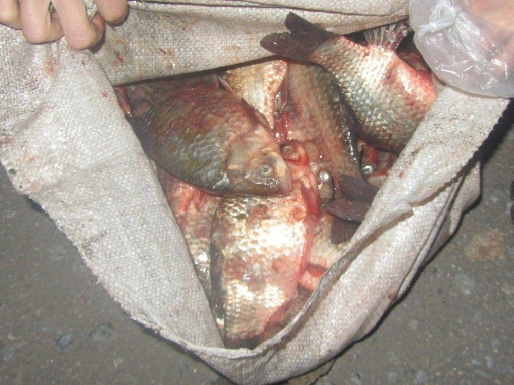 Почти 200 кг изъятой у стихийщиков рыбы снова сожгли в Керчи