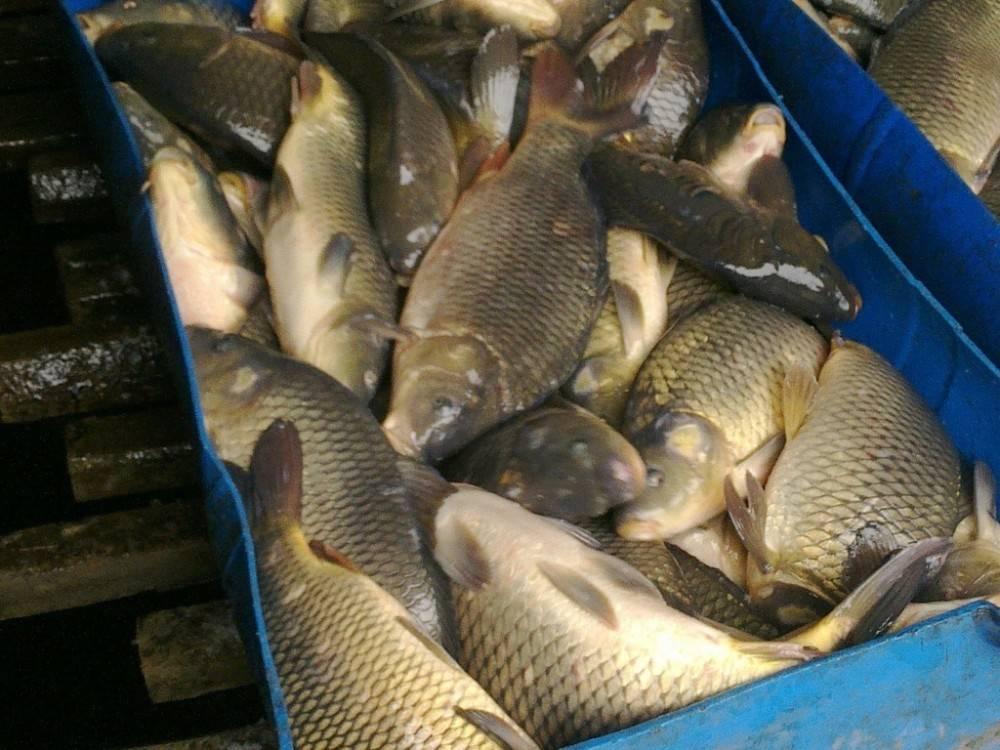 В Керчи снова изъяли у стихийщиков и сожгли рыбу и колбасу