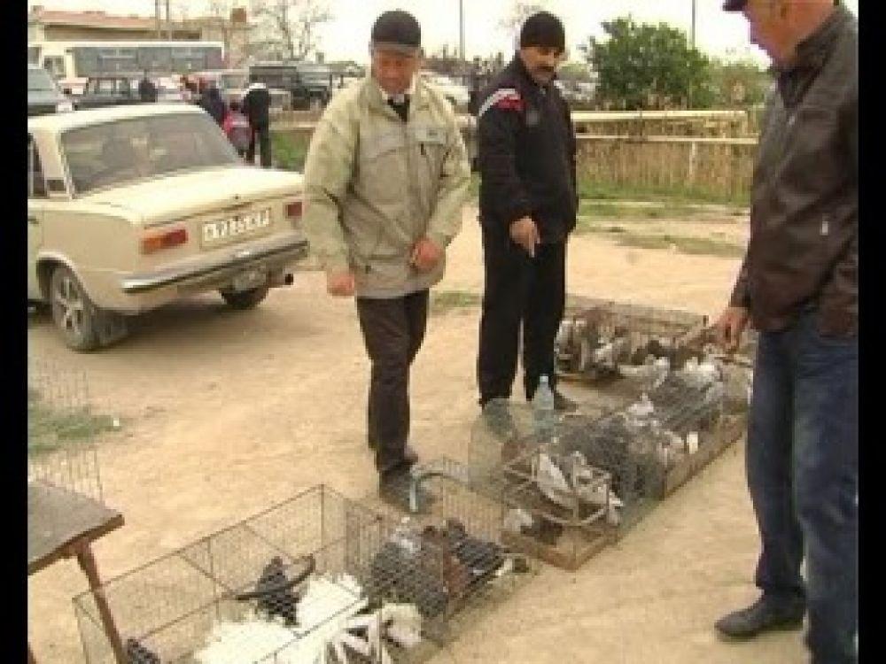 Птица мира: В день взятия Рейхстага Феодосии провели выставку голубей