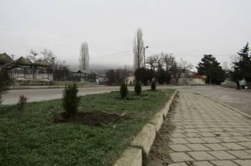 Участники универсальных ярмарок в Щебетовке высадили туи у местного ДК