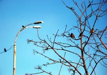 В Феодосии началась весна, правда пасмурная